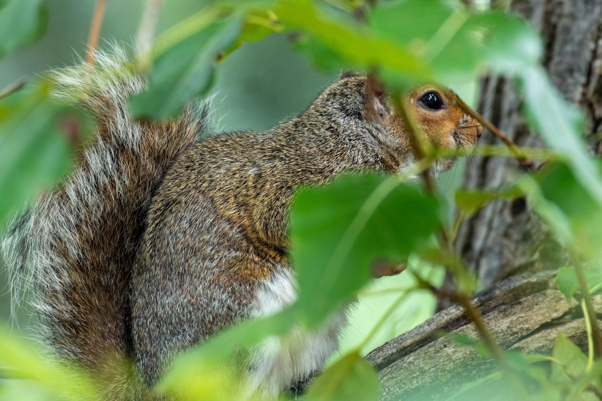 Squirrel Taste