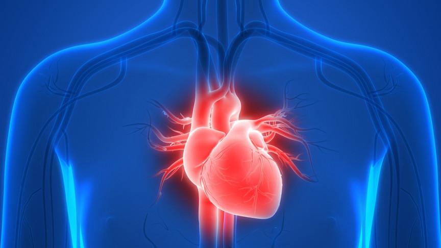 atrioventricular valves